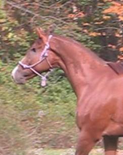 Ponytale1976